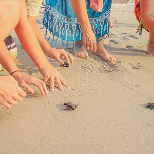 Release of baby turtles on Garza Blanca' beach