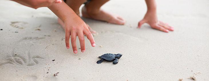 Sea Turtles to the Rescue