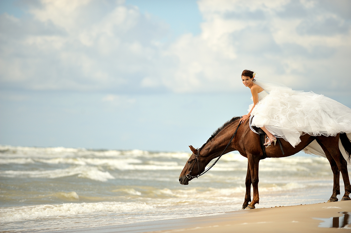 Horseback or Camel for Wedding Day