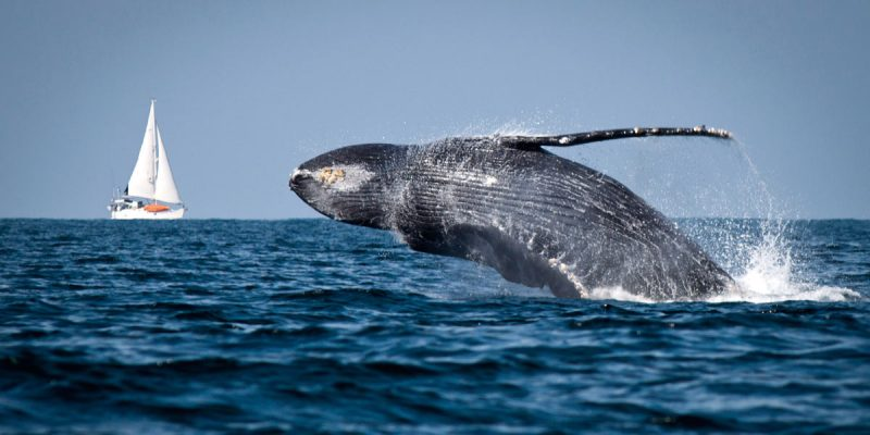 Whale of a Time in Puerto Vallarta