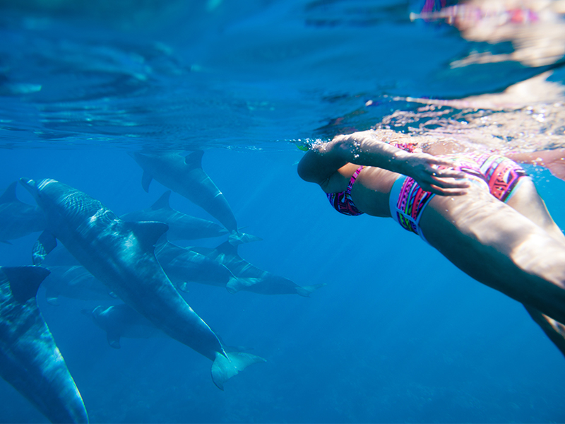 Swimming with Dolphins in Los Cabo