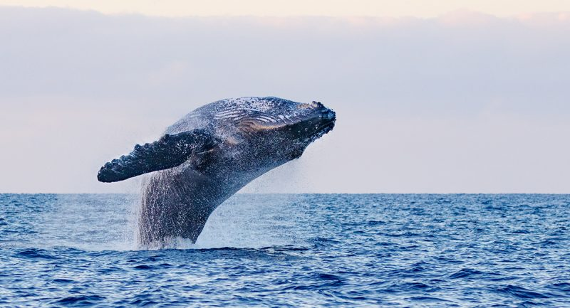 Whale Watching in Los Cabos