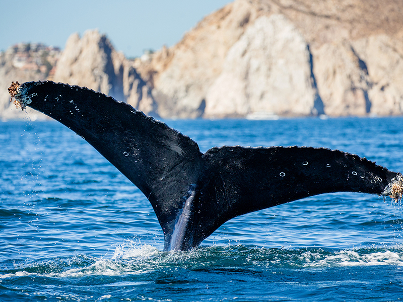 A family treat in Los Cabos
