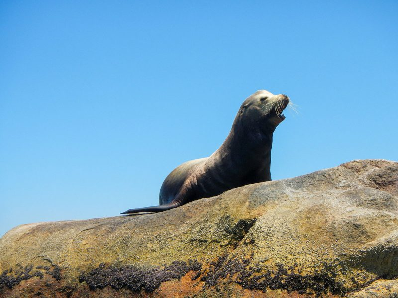 Sea Lions at Garza Blanca