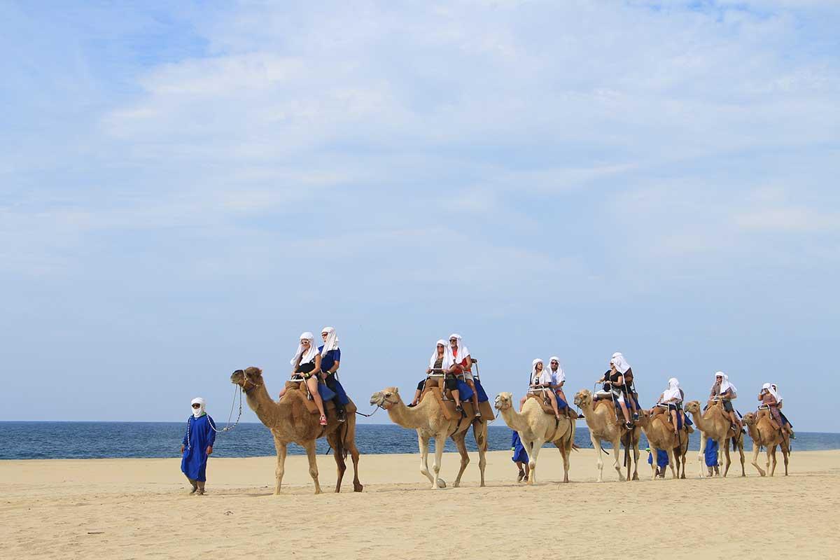 Camel Rides in Los Cabos
