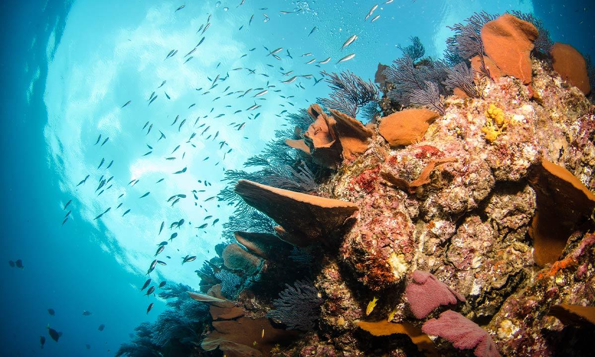 snorkeling_in_los-cabos