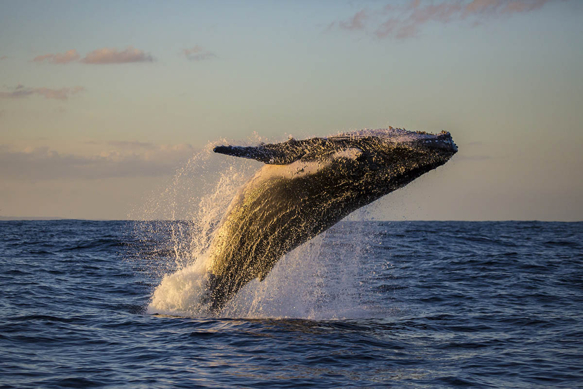 whale watching season in cabo