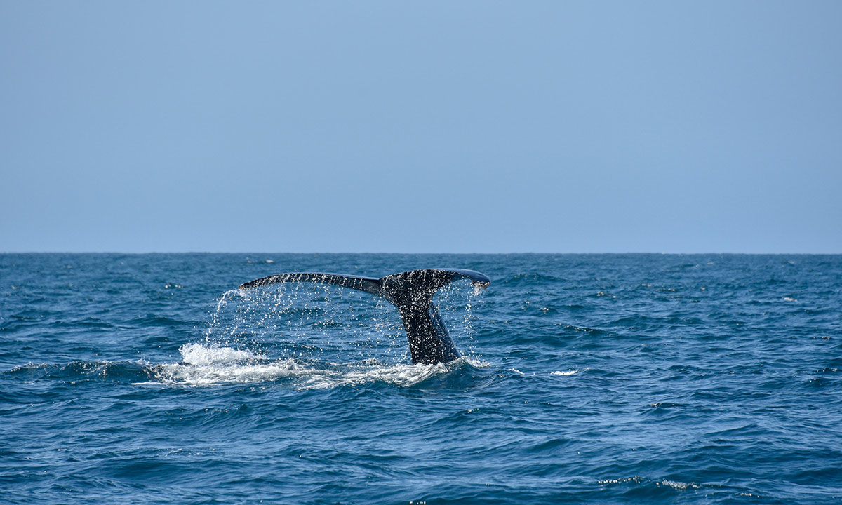 whale watching season