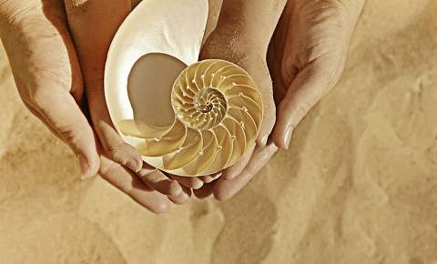 Recolectar conchas de mar