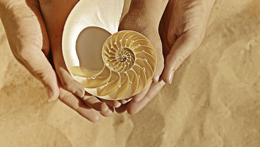 Recolectar Conchas De Mar Kids Actividades En Vallarta - Fotos-de-conchas-de-mar