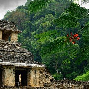 The ruins of ancient Mayan city Palenque
